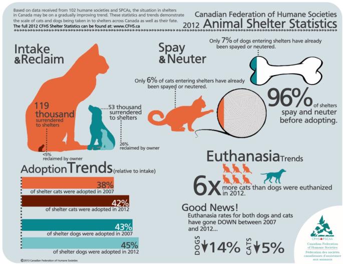 Animal Shelter Stats